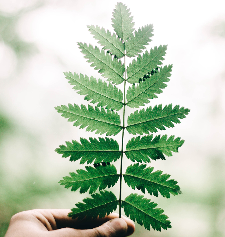 <p><strong>Your home is a sanctuary</strong><br />